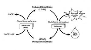 glutation metabolisme