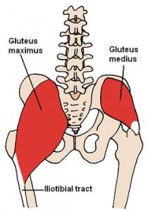 gluteusmuskler