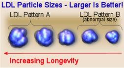 LDL-størrelse