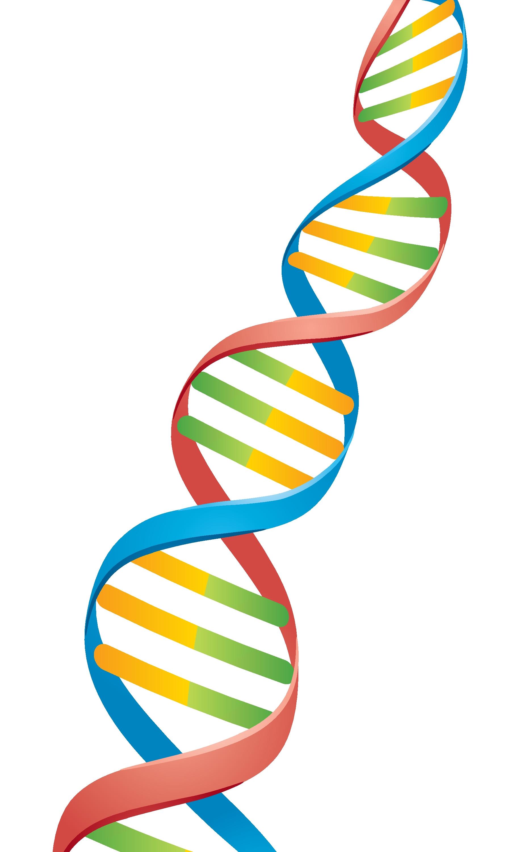 Vector illustration of a Double Helix DNA Strand.  Иллюстрация.