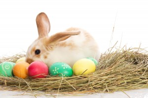 Easter bunny with colored eggs in the hay