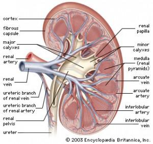 Bilde: www.britannica.com