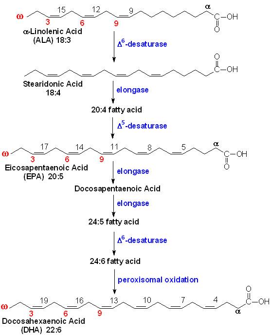 Bilde: www.themedichalbiochemistrypage.com