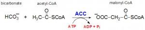 Bilde: www.themedicalbiochemistrypage.org