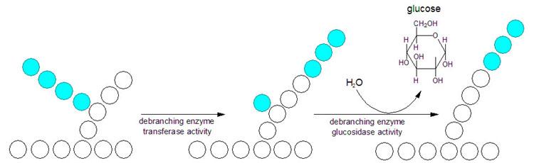 Bilde: http://themedicalbiochemistrypage.org/