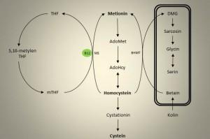 Enkarbonmetabolisme 2