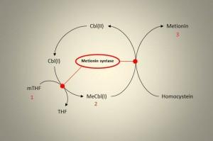 Enkarbonmetabolisme 3