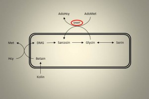 Enkarbonmetabolisme 4