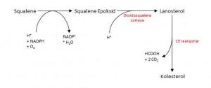 Kolesterol 3