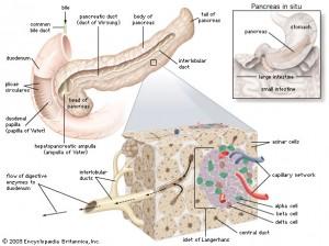 Pankreas 2