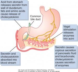 pankreasstimulering