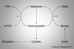 Metylering 2