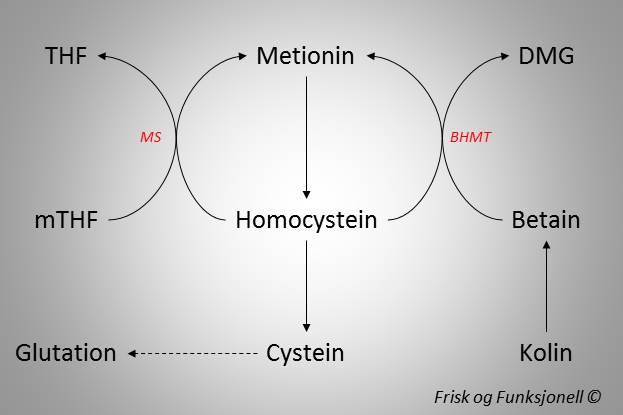 Homocysteinmetabolisme