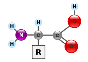 Bilde: Wikipedia
