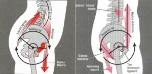 Bilde hentet fra: http://bretcontreras.com/why-do-i-anterior-pelvic-tilt/