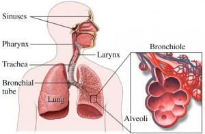 lunge'
