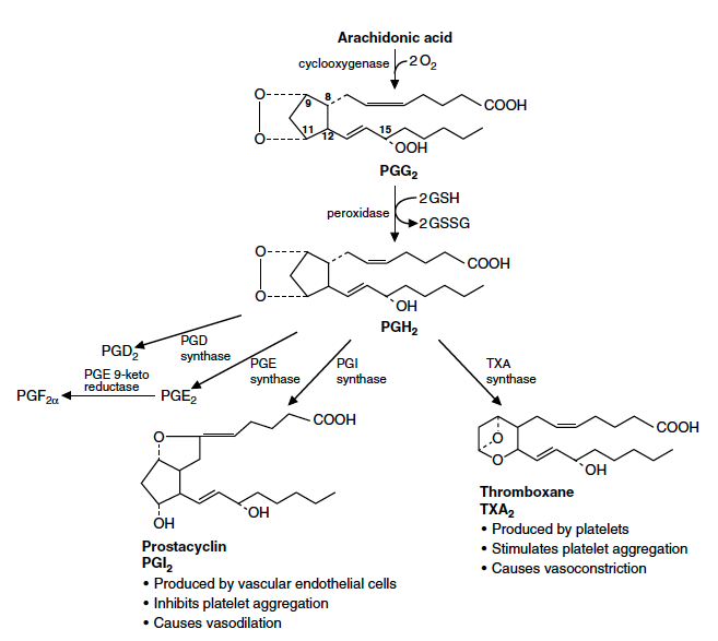 Figur 3. © Mark's basic medical biochemistry