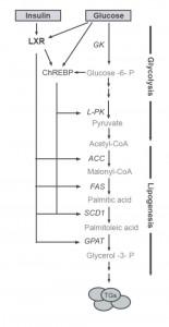 Figur 3. Enzymer involvert i glykolyse og lipogenese. Modifisert fra (6).